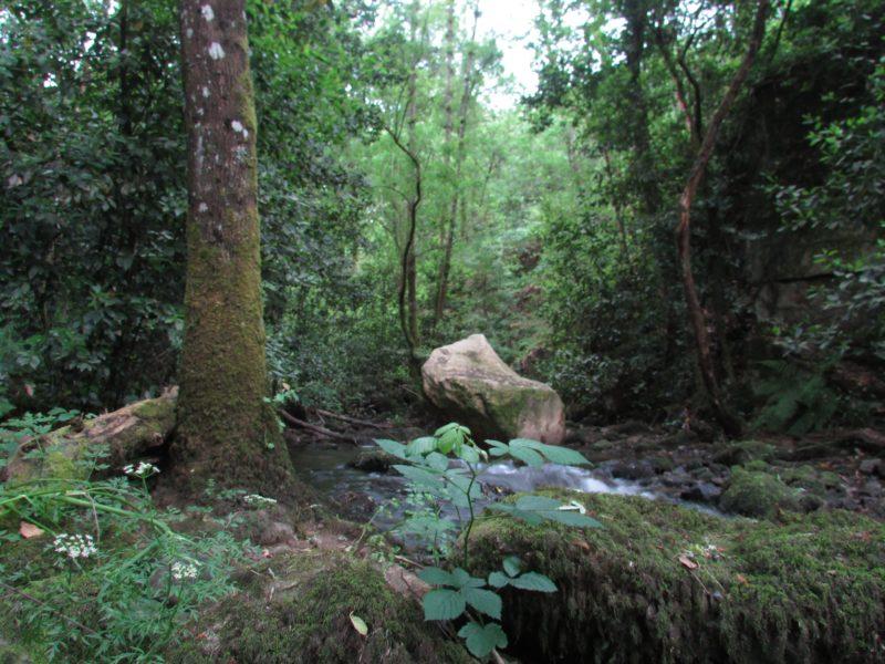 Os Muiños, Barbadás - naturaleza