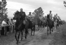 Fiesta caballo cartelle