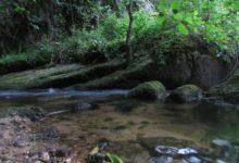 Photo of Peces muertos en el río