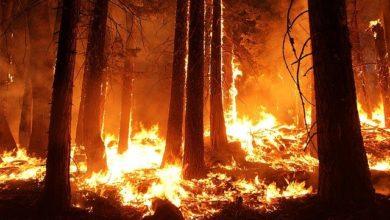 Photo of ¿Por qué se queman nuestros montes?