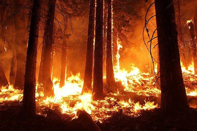 ¿Por qué se queman nuestros montes?